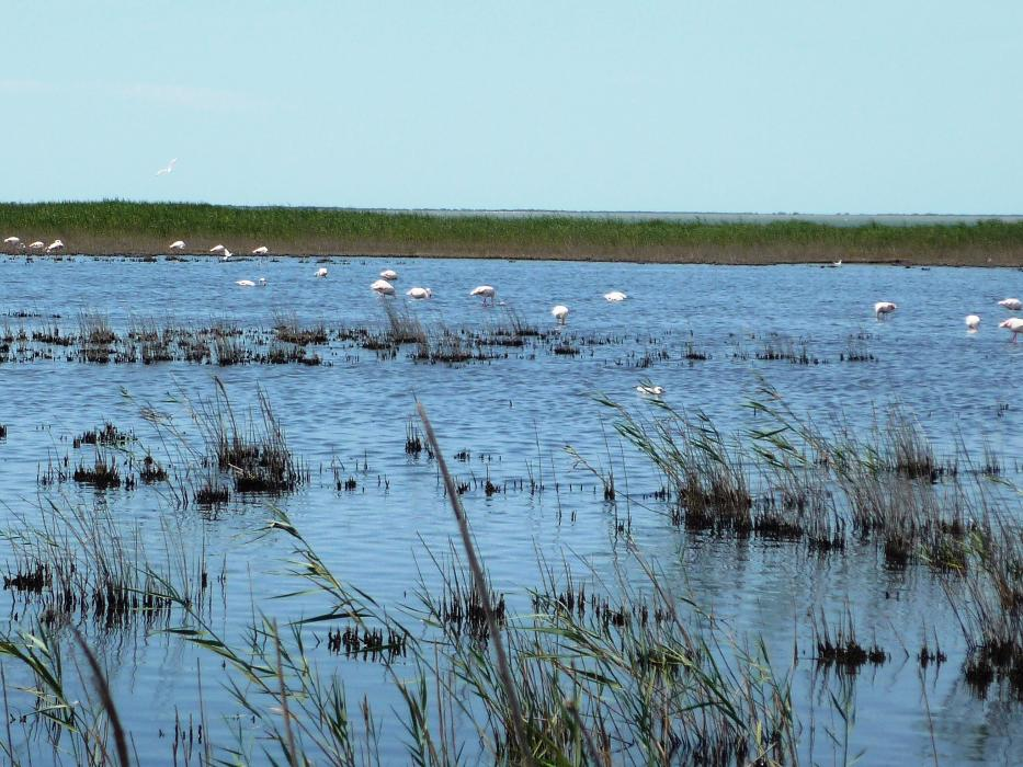 camargue-flamands.jpg